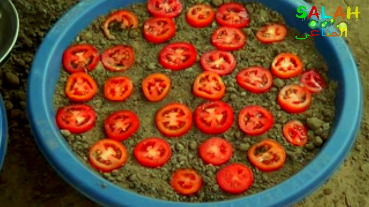 الطماطم كيفية زراعة الطماطم فى المنزل بكل سهولة شاهد Youtube Tomato Growing Plants Plants