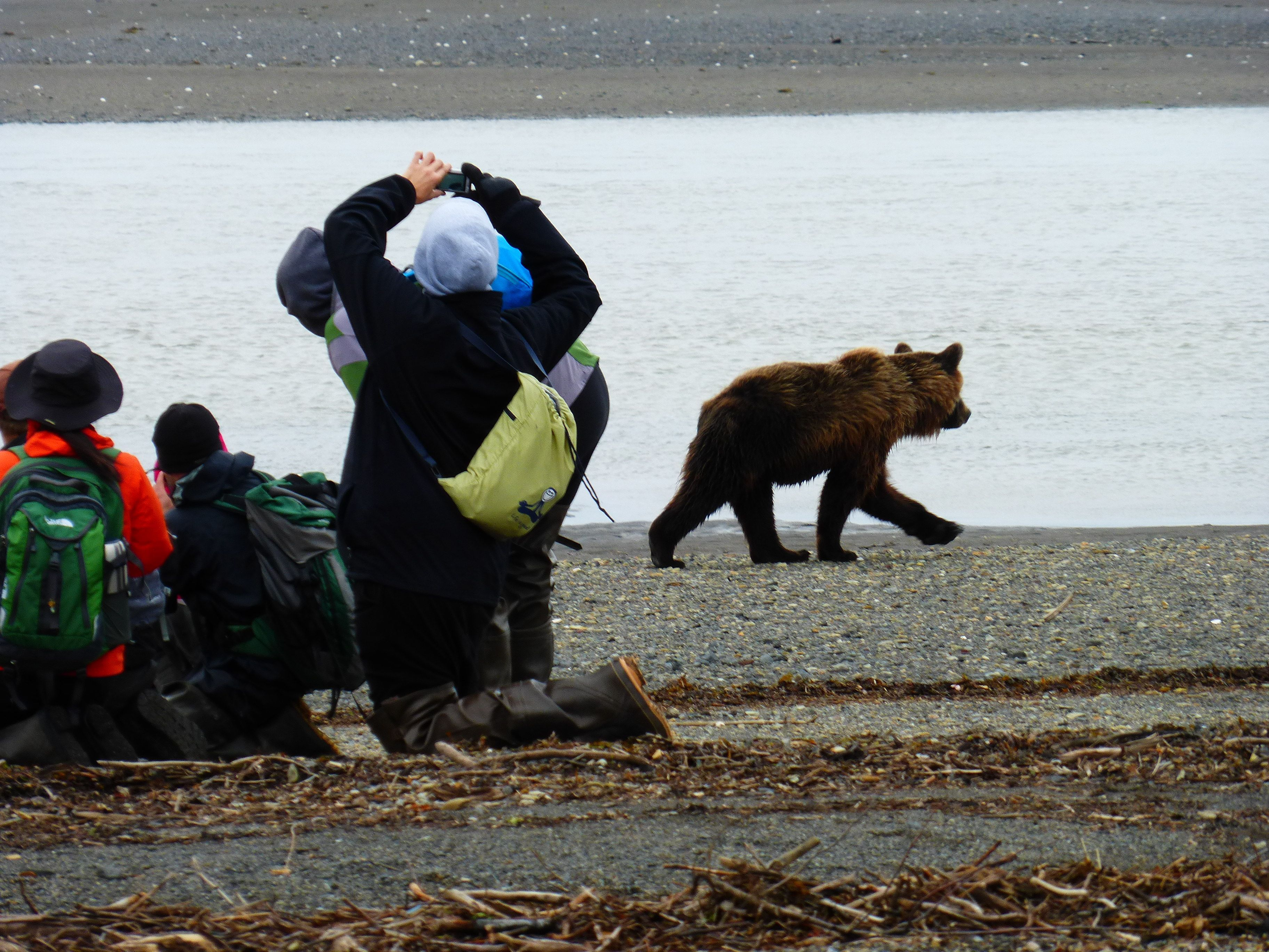 This past August, we visited the Katmai Peninsula in Alaska to see the Grizzlies.  Awesome!  We were up close and personal with the bears.  Would do it again in a heartbeat