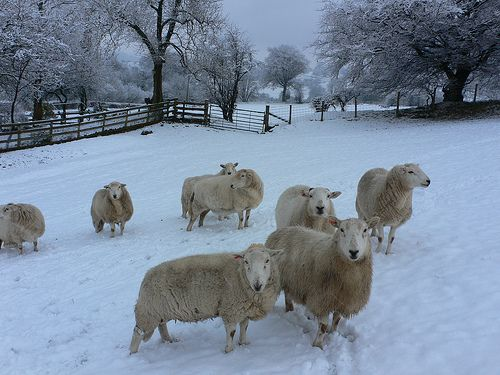 Photo Friday – A snowy scene in the Brecon Beacons – in Wales #visitwales