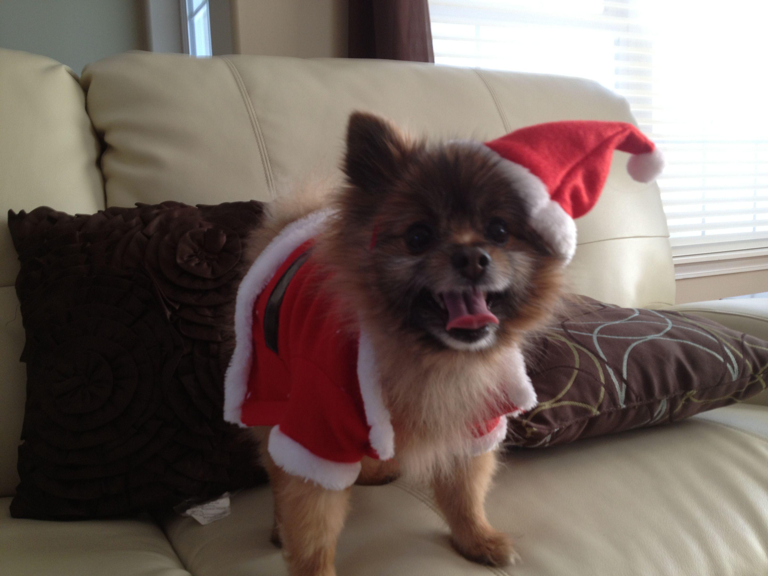 Cutest santa