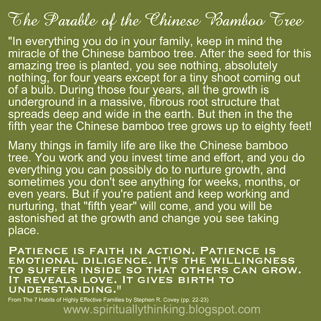 The Parable Of The Chinese Bamboo Tree Patience Is Faith In Action