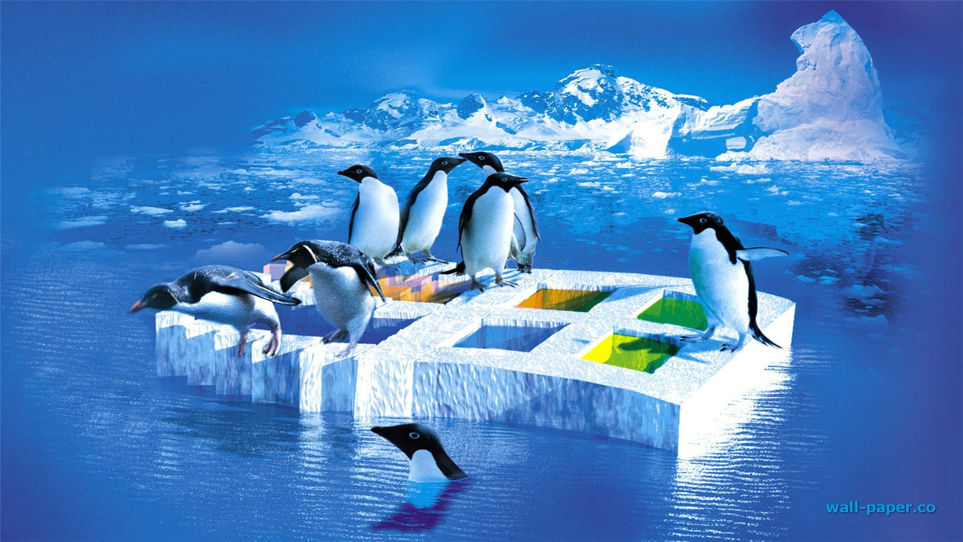 Family Penguins on the Ice.♥ Linux, Windows wallpaper