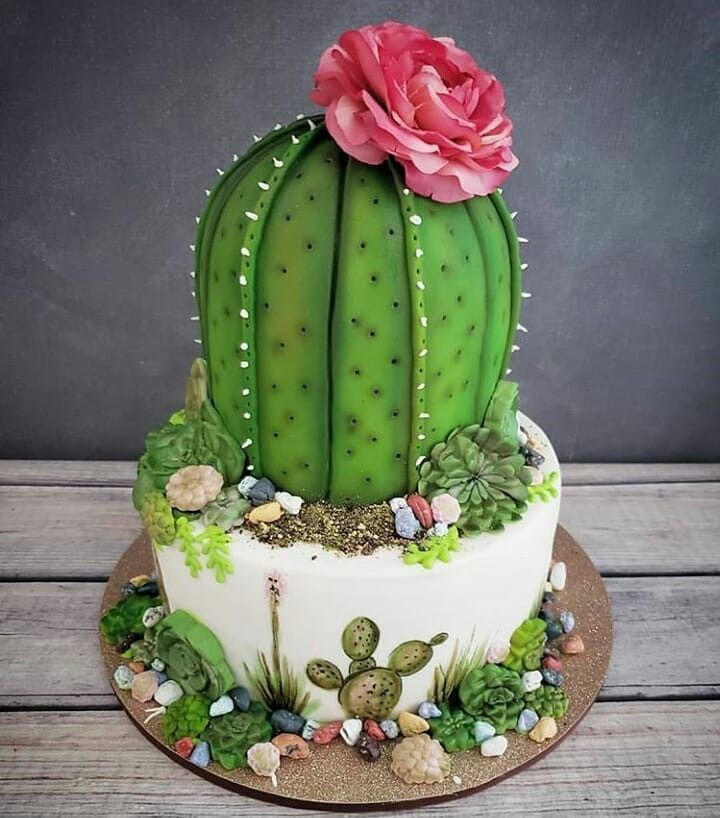 25 Succulent Diy Ideas E G Hd The Green Area And Tutorials Container Gardening In 2020 Tortendeko Kuchen Kuchen Kuchen Und Torten