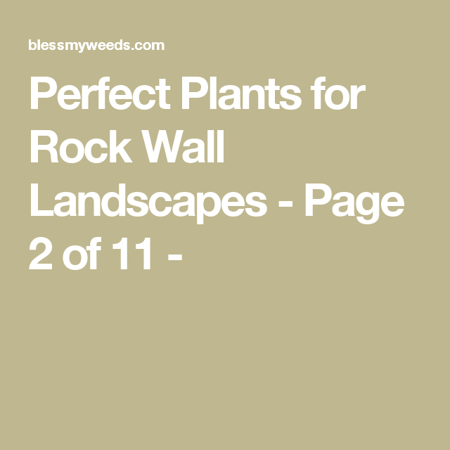 Sloping Garden Ideas And Optimal Solutions For Landscape: Perfect Plants For Rock Wall Landscapes
