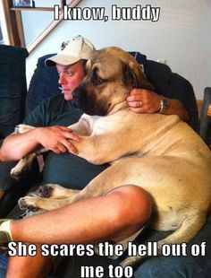 Dog Really Are A Man S Best Friend 20 Pictures Funny Dog Pictures Funny Animals Funny Dogs