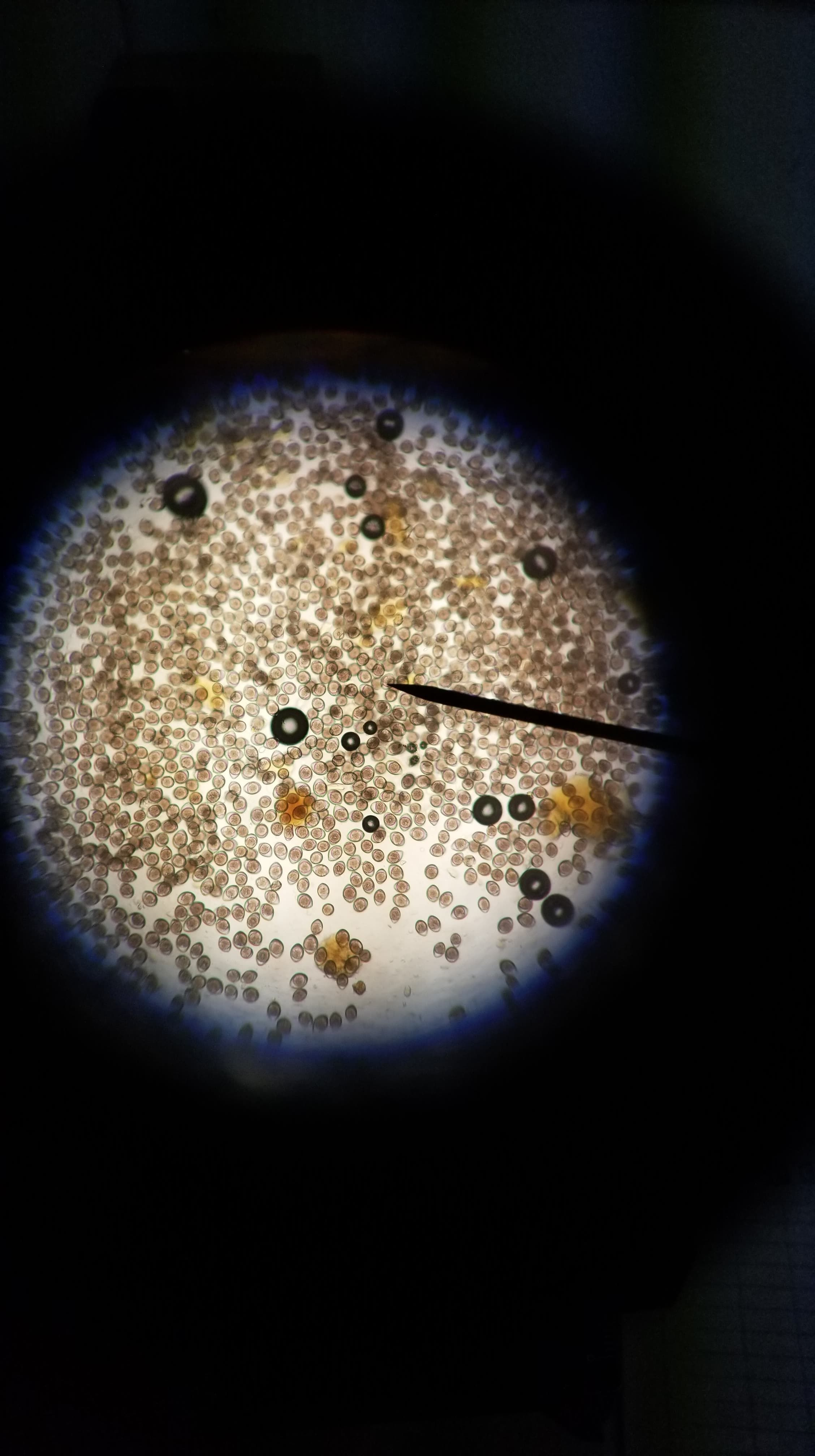 Pin On Under The Microscope Veterinary Edition