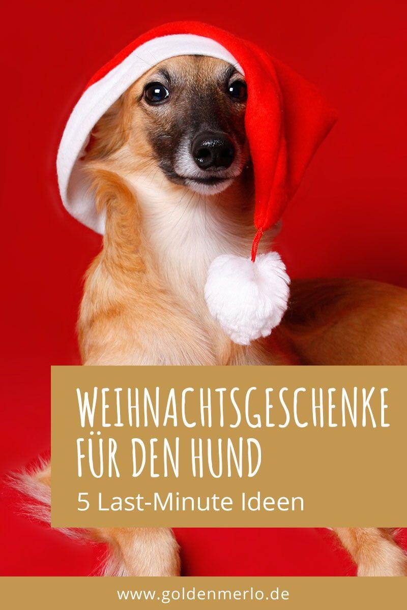 Goldenmerlo De Silken Windsprite Hundeblog Hund Weihnachten Silvester Mit Hund Weihnachtsgeschenke Fur Hunde