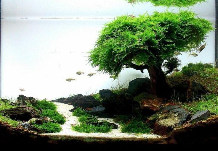 Nano Aquarium Einrichten Beispiele Aquariums Pinterest
