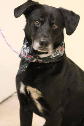 NAME: Lucas ANIMAL ID: 27679248 BREED: Retriever SEX: male EST. AGE: 6 yr Est Weight: 45 lbs Health: heartworm neg, Luxated Left Hip Temperament: dog friendly, people friendly. ADDITIONAL INFO: RESCUE PULL FEE: $49 Intake date: 4/27 Available: Now