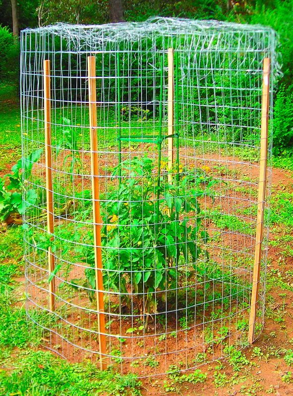 How To Build A Squirrel Proof Garden Enclosure For Under 100 00