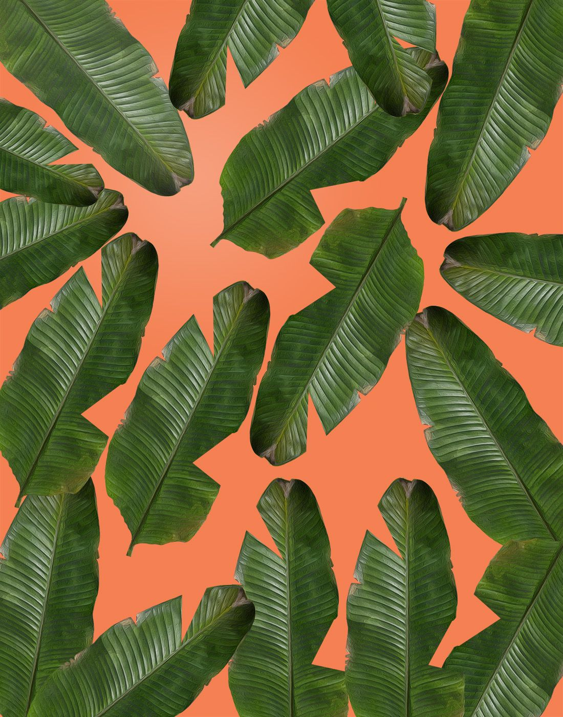Banana Leaf Wallpaper Plant Wallpaper Banana Leaf