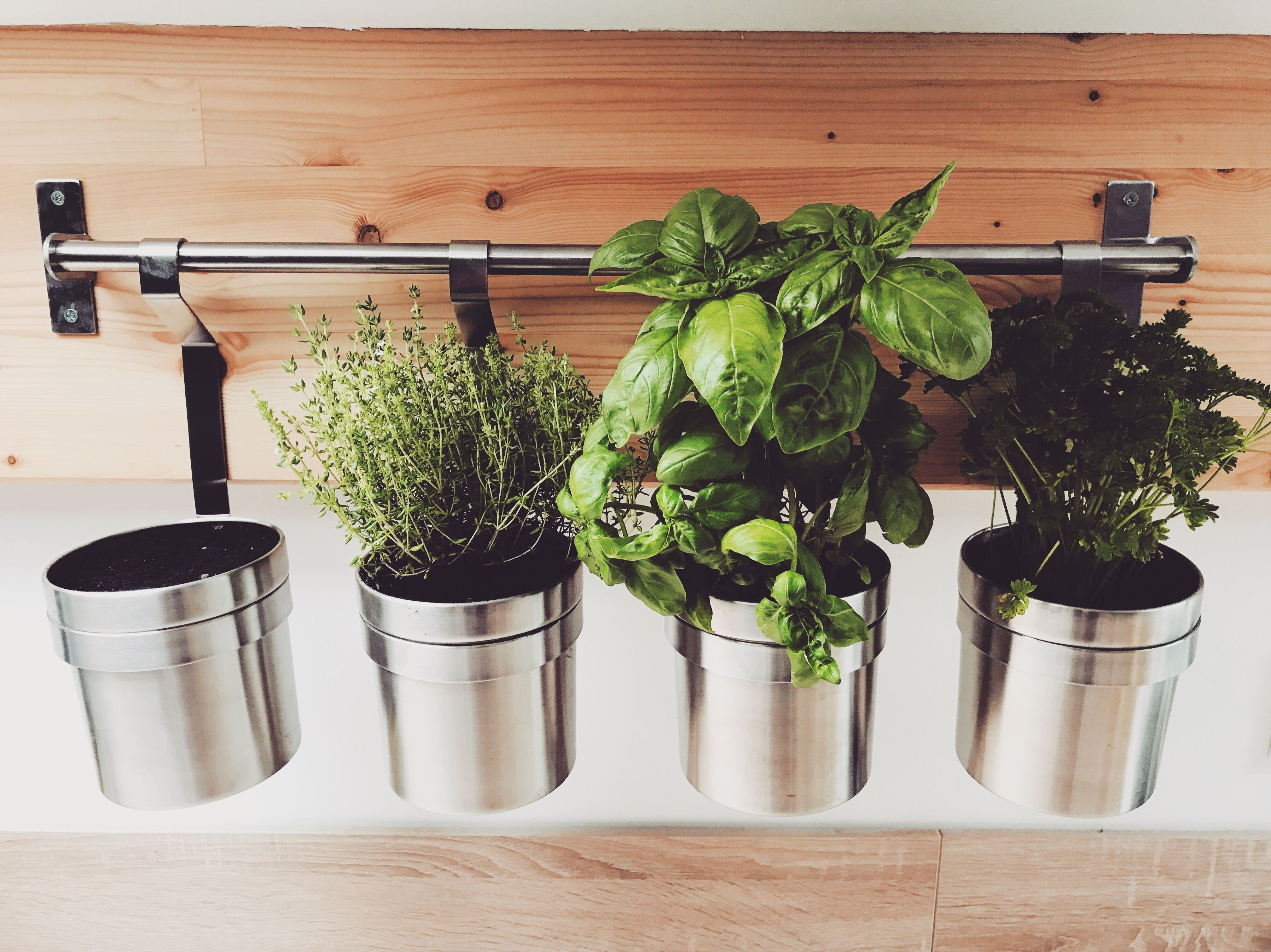 jardinage déco plantesaromatiques basilic thym