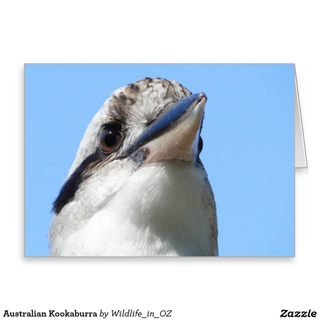 Australian Kookaburra Greeting Card Australian Wildlife Click On