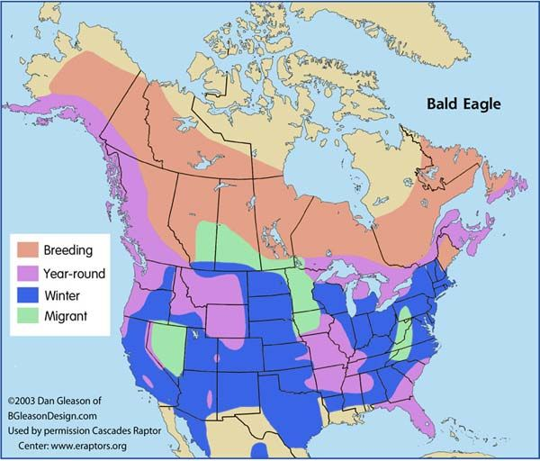 Range map for the Bald eagle Wildlife of BC Pinterest Bald
