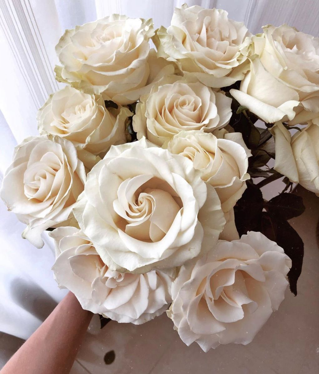 Cream Roses In 2020 Wholesale Roses Cream Roses Wholesale Flowers