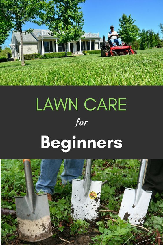 If you\u0027re new to lawn care or have just started to take it seriously