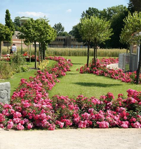 Flower Carpet Roses Landscaping With Roses Ground Cover