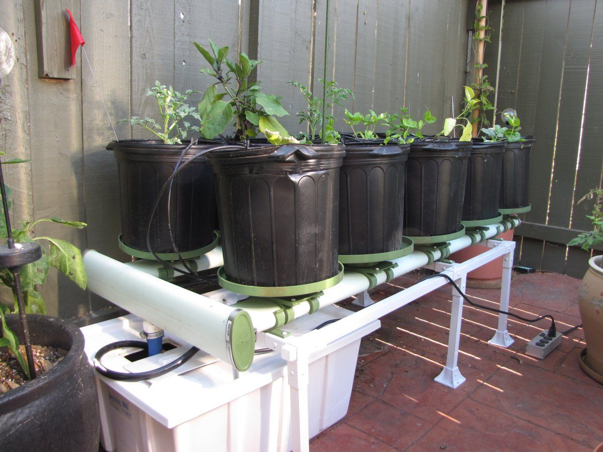 Grow Fish and Vegetables in Your Garage with Aquaponics