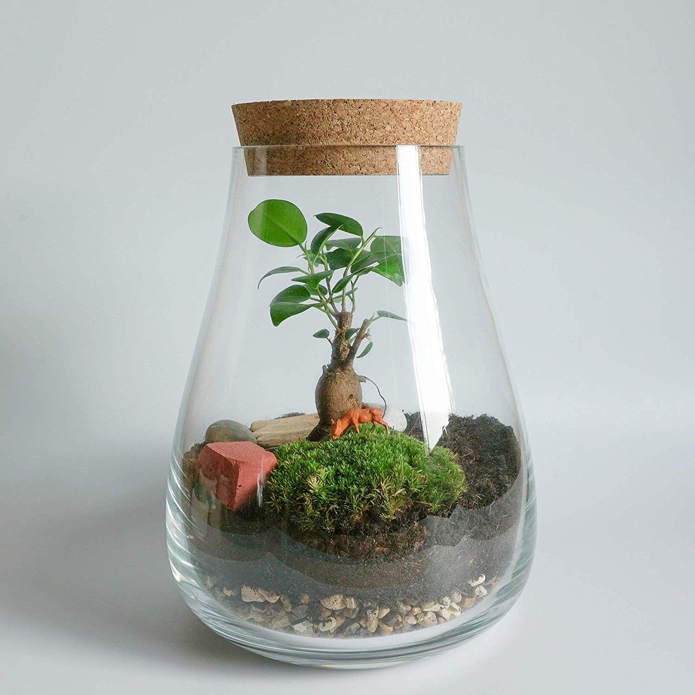 Concretelab Co Terrarium Kit With Glass Vase Optional Bonsai Tree