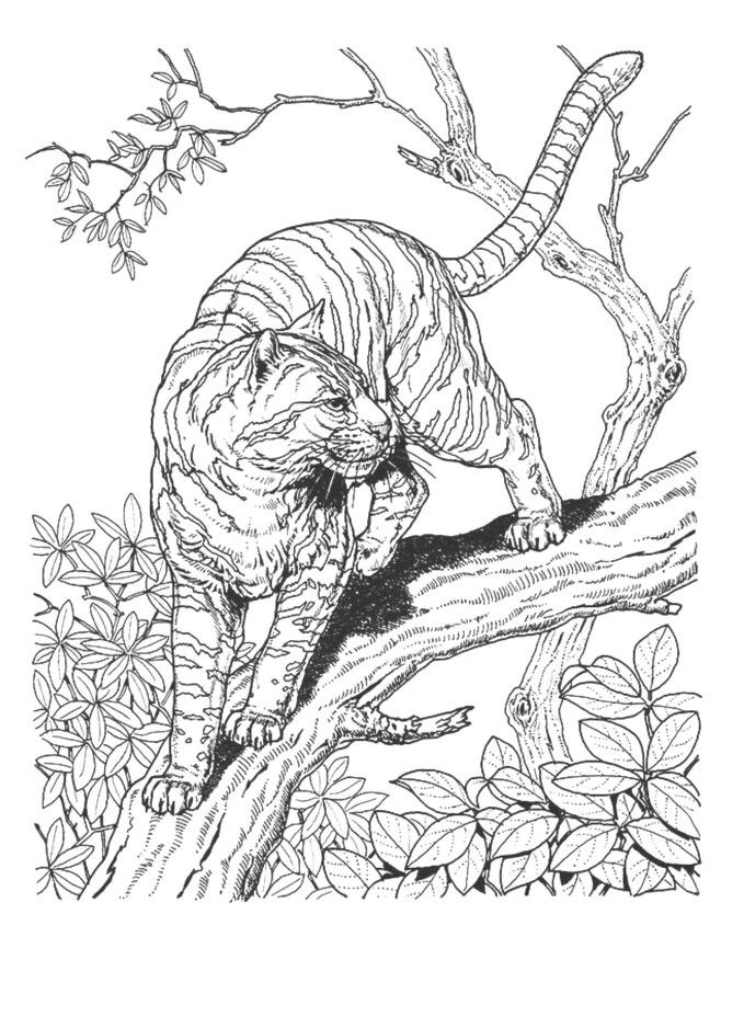 Big Cat Cat Coloring Page Mandala Coloring Pages Detailed Coloring Pages