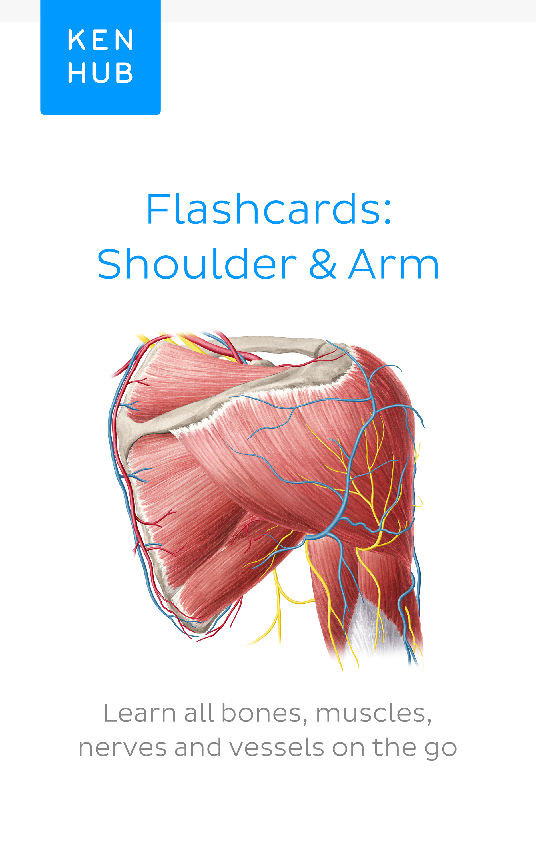 One of the most frequent exam topics. #learn more about the #muscles ...