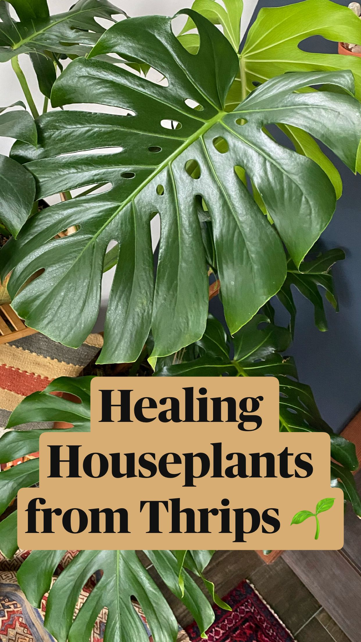 Healing Houseplants From Thrips An Immersive Guide By Sacred Elements