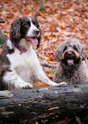 Best Friends Adventures In The Woods Springer Spaniel English Springer Spaniel Portuguese Water Dog