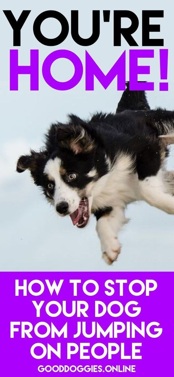Does Your Dog Jump All Over Visitors To Your Front Door Learn How