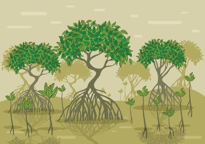 mangrove vector forest tree illustration plant illustration forest illustration mangrove vector forest tree