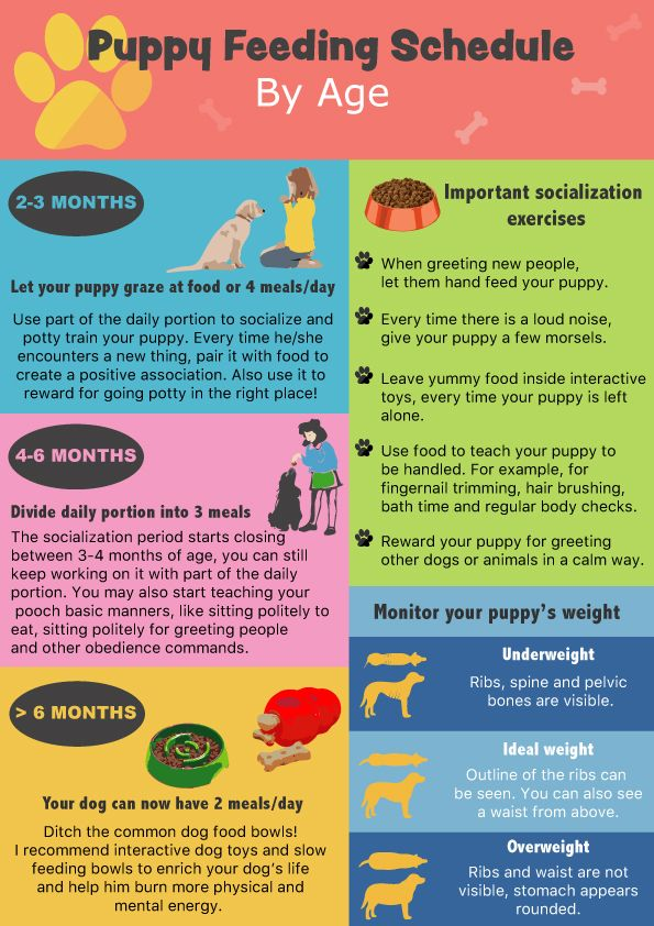 Puppy Feeding Schedule Look at the chart, follow the tips