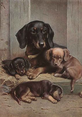 Dachshund Dog Puppies C Reichert 1913 New Note Cards Ebay