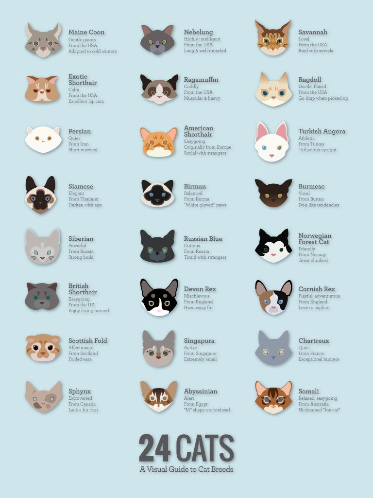 Pin by dinding 3d on pet Cats, Cat breeds, Cat cafe