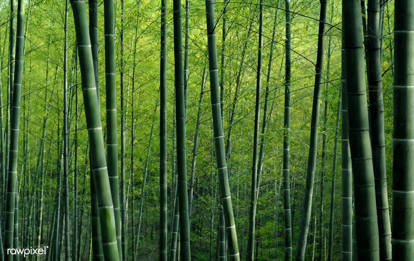 Green Bamboo Forest Textured Wallpaper Free Image By Rawpixel Com