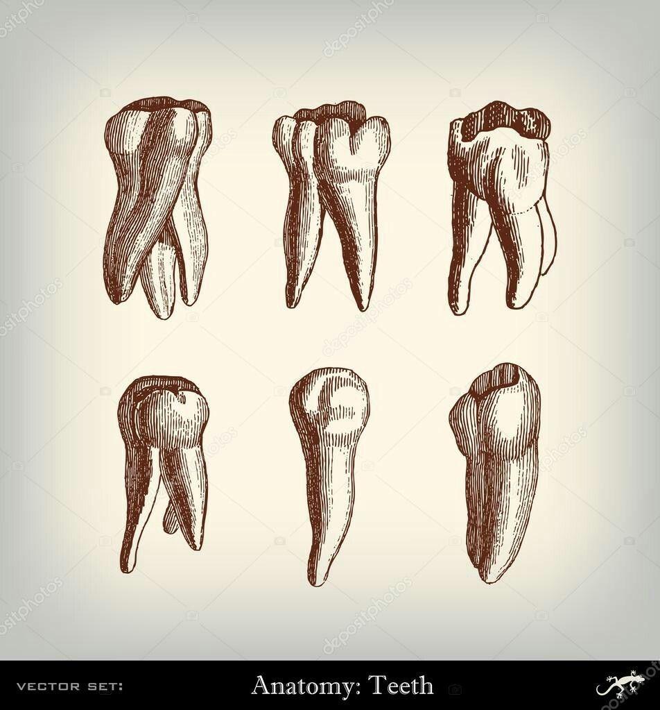 Pin by cristina henriquez on consultorio dental | Pinterest ...