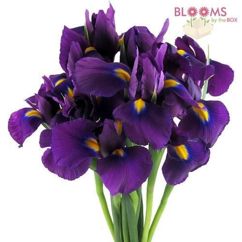 Names Of Purple Flowers For Wedding: Wedding Flower Guide, Purple Wedding Flowers