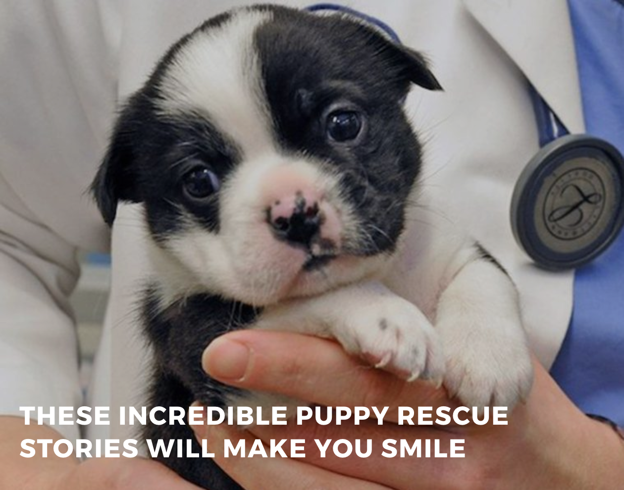These Incredible Puppy Rescue Stories Will Make You Smile