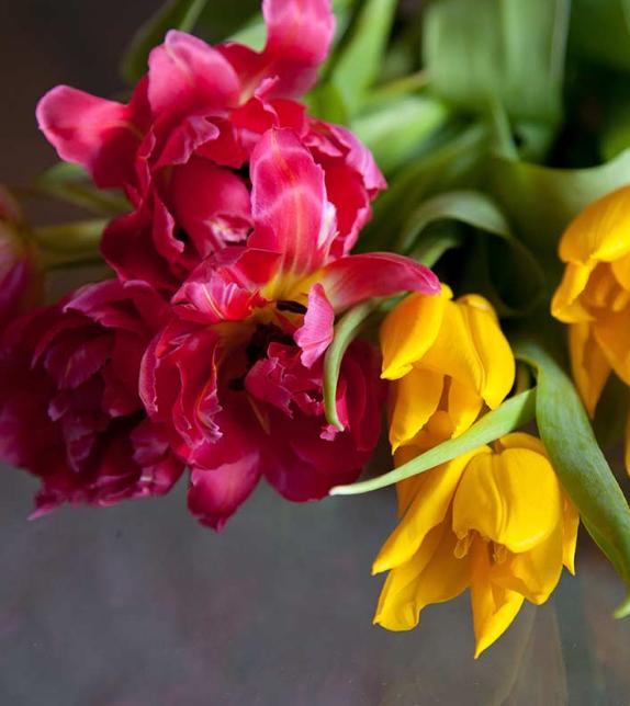 Foto Bunga Tulip Warna Hitam Gambar Bunga Tulip Warna Bunga Hitam Memang Kurang Populer 25 Jenis Bunga Tulip Paling Indah A Bulbous Plants Flowers Tulips