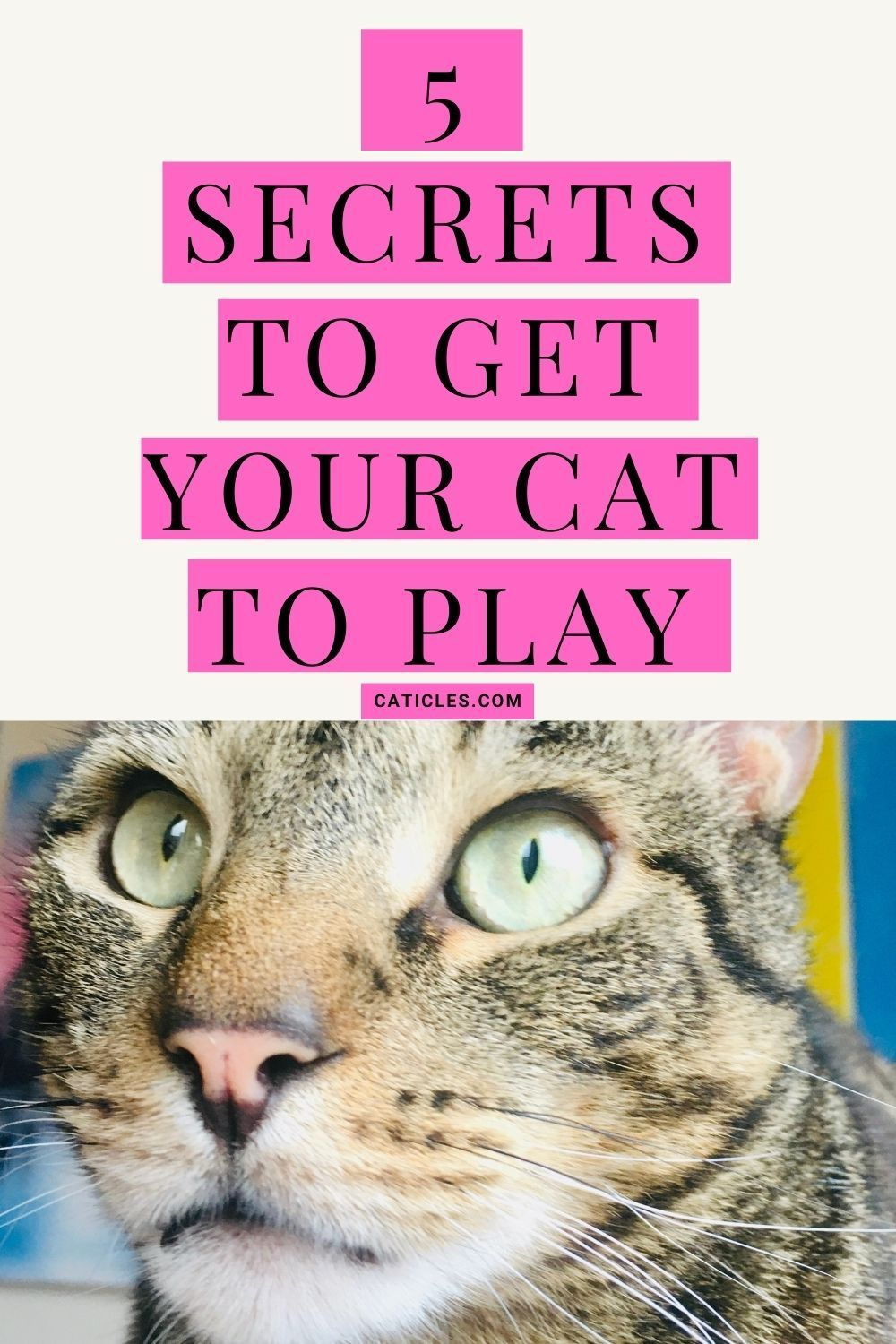 How To Play With A Cat Get Your Cat To Play In 30 Days In 2020 Cat Care Tips Getting A Kitten Kitten Care