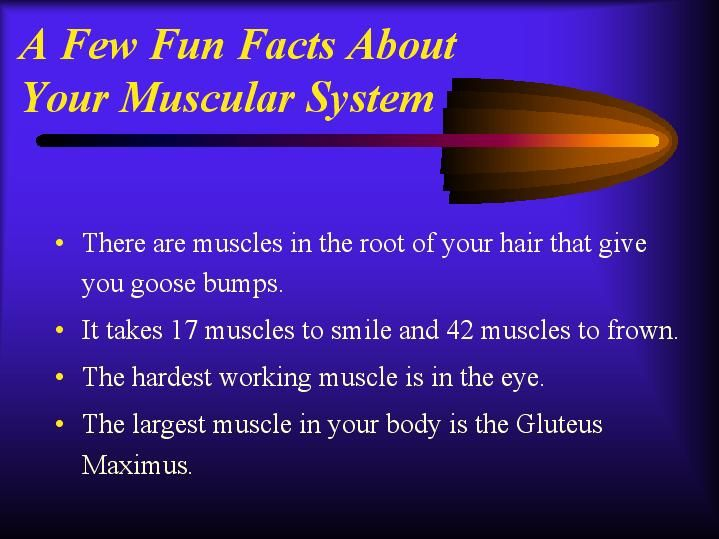 a few fun facts about your muscular system | muscular system, Muscles
