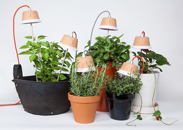 Bulbo Grow Vegetables Indoors With Led Lights Ippinka Growing Plants Indoors Growing Vegetables Indoors Growing Vegetables