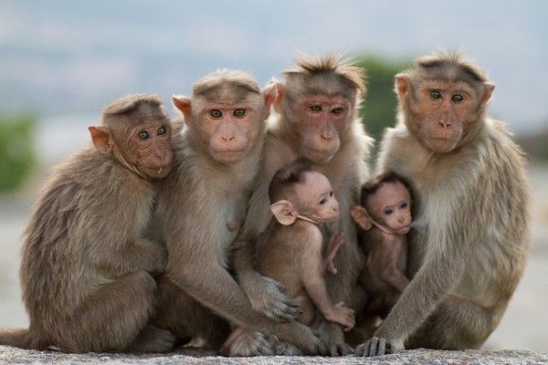 30+ NIce Pictures of Monkeys   Monkey pictures, Animal guides, Animals