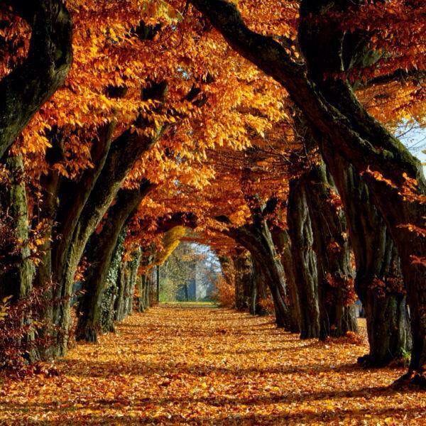 Ağaç tünel (с изображениями) | Пейзажи, Осенние деревья ...