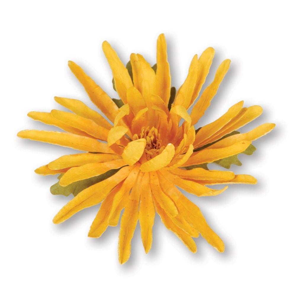 Sizzix Thinlits 8PK Flower Spider Mum dies