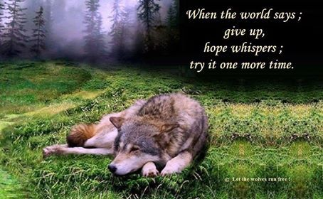 Petra U Luca Shared Let the Wolves Run Free Photo