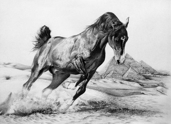 фото коня графика стихотворные