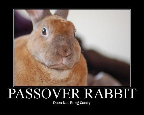 Passover Rabbit Motivator #2 | Cute little animals, Rabbit, Jewish ...