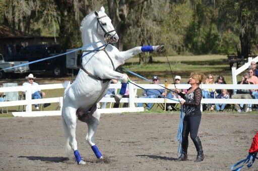 Absolutely stunning horse!