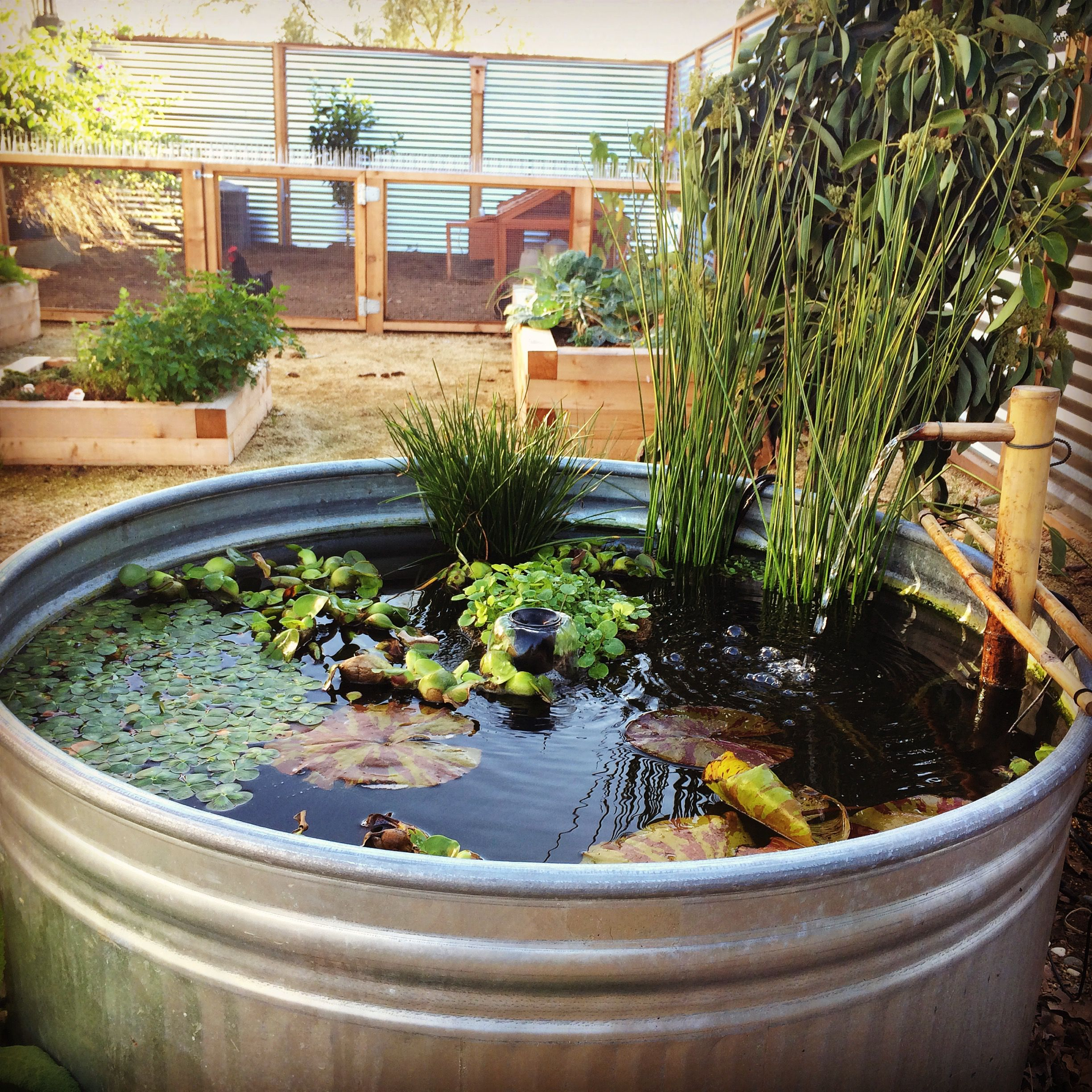 Koi Pond Made From 165 Gallon Galvanized Tub With A 24inch Bamboo