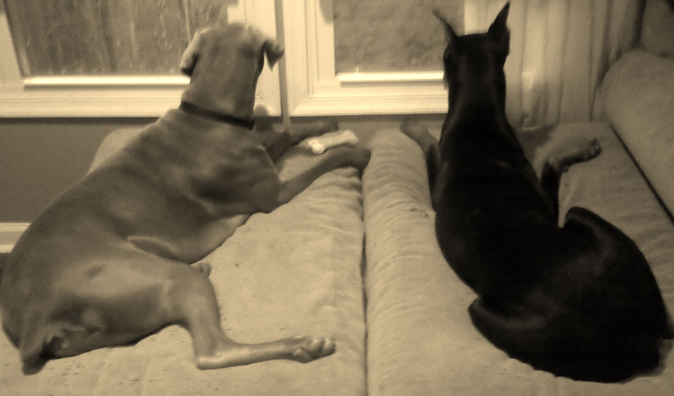 Prince Lexington & Princess Sophie Animals, Dogs, Prince