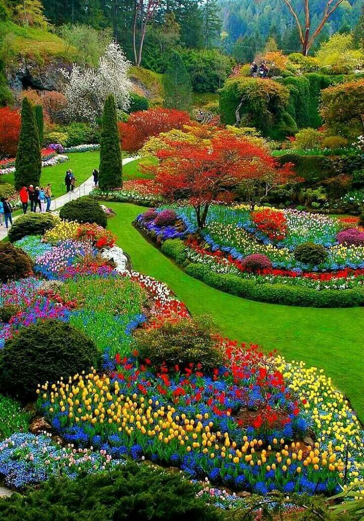Pin by Carolyn Beeler on Gardening   Beautiful gardens